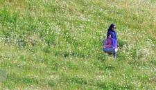 دشت گلهای بابونه «فندقلو»/تصاویر