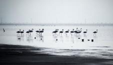 پرندگان مهاجر در استان گلستان