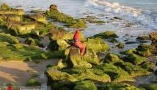 بهار ساحلی در سواحل جنوب کشور/تصاویر