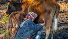 زندگی گالش ها در مازندران/تصاویر