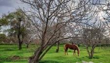 طبیعت بهاری قزوین/تصاویر