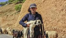 کوچ عشایر؛ سختی ها و زیبایی ها/تصاویر