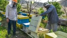 پرورش زنبور عسل/تصاویر