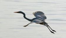تصاویر/ پرندگان مهاجرِ «خلیج فارس»