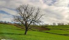 مزرعه کلزا در روستای زرندین نکا/تصاویر
